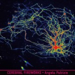 Angela Patrizio - vincitore per la categoria neuroscienze